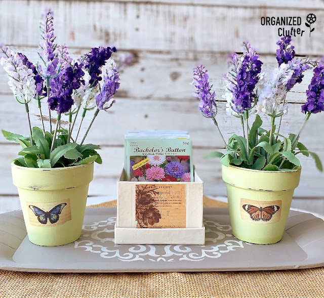Photo of two flower pots and box of seed packets on a tray.