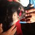 Homem espanca cachorro com um facão em Tobias Barreto