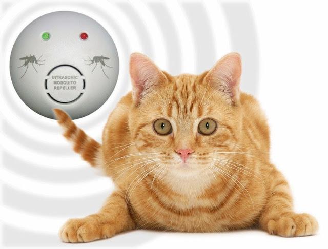 Risultati immagini per gatto e infrasuoni