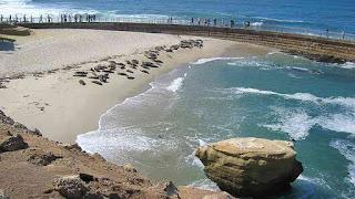 Seal and sea lion pups in La Jolla Cove rookery, July 4th fireworks, San Diego, California, APRL, Bryan Pease, PETA, Ingrid Newkirk, Animal Advocates, Mary Cummins
