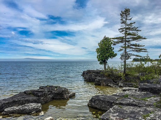 Two famous trees at Toft Point State Natural Area in Bailey's Harbor Door County
