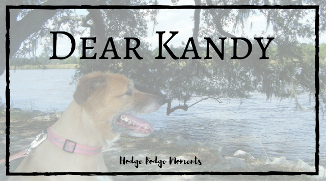 Dear Kandy: A Letter to My Dog