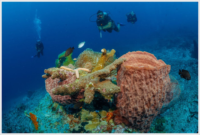 Diving in bunaken island, fukui point coral
