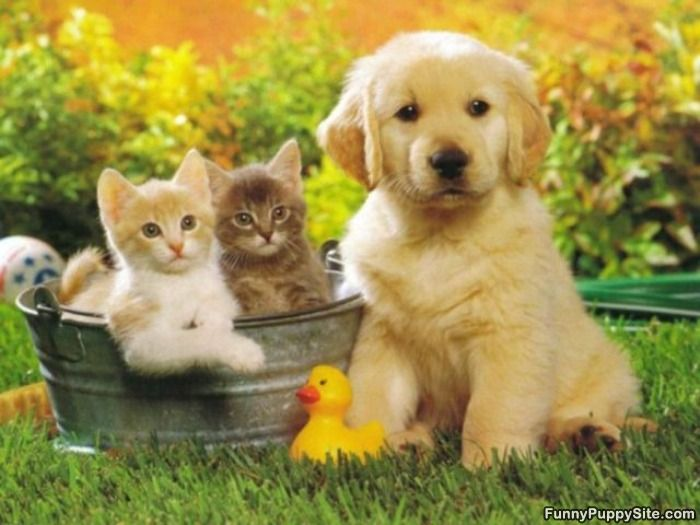 Cute Cats And Dogs