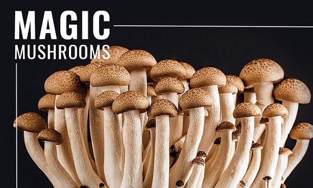 health benefits magic mushrooms medical use shrooms ptsd depression