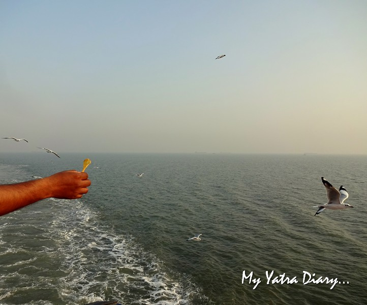 Seagulls fluttering behind the M2M Ro-Ro ferry Mumbai to  Alibagh