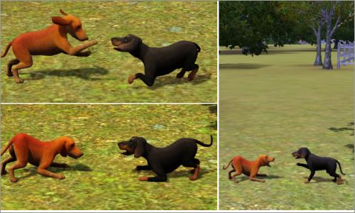 The Sims 3 : Jamnik krótkowłosy