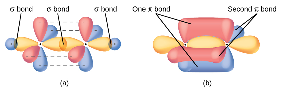 Why does Carbon form 4 covalent bonds instead of 2? - carbon bonds