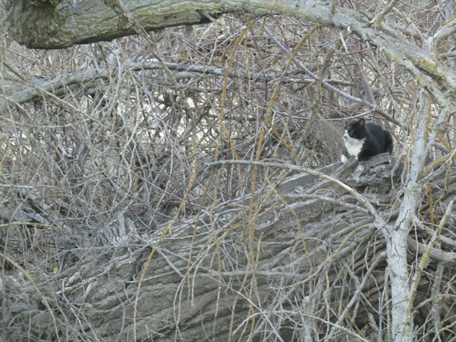 """""""Larry"""" Moore Park in Paso Robles: A Photographic Review - Cat in Tree"""