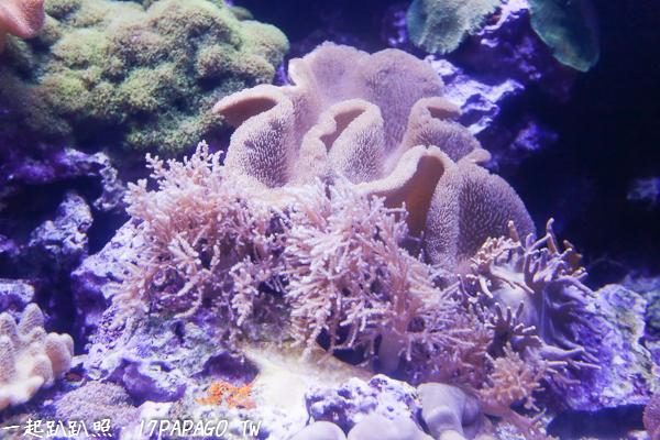軟軟的珊瑚