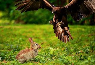 تفسير رؤية الطيور الجارحة في المنام