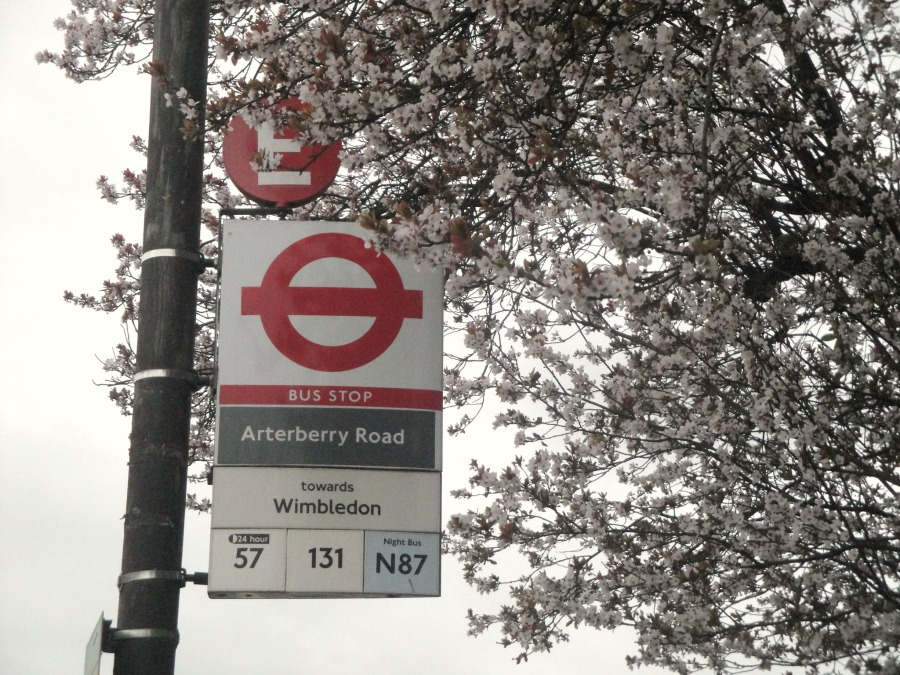 The sign at Arterberry Road bus stop is surrounded by beautiful pale pink blossoms.
