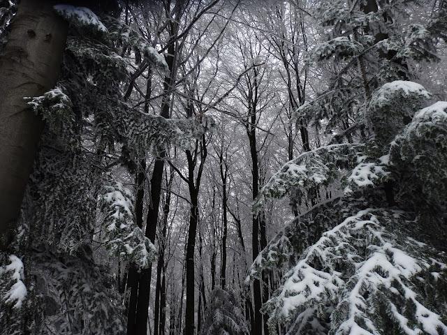 Zimowy las obok trasy narciarskiej.