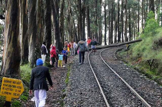 Nilgiri Mountain Train track