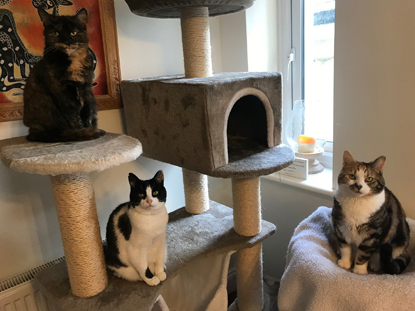 three cats sitting on a cat tree