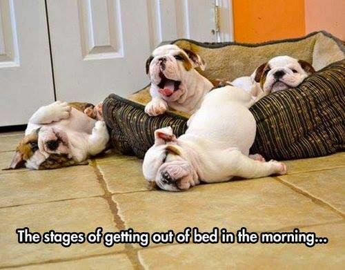 Funny Stages Getting Out Of Bed Puppies Picture