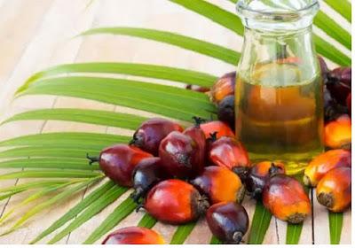 Minyak Kelapa Sawit - pustakapengetahuan.com