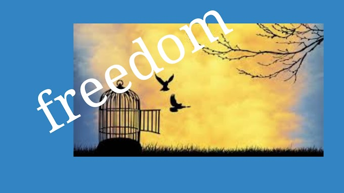 What is freedom ?
