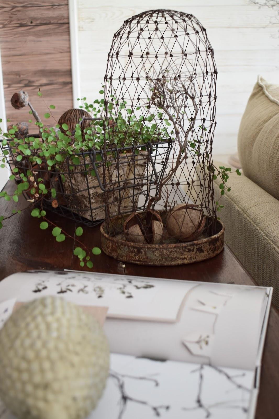 3 Dekoideen für deinen Konsolentisch und Sideboard. Natürlich dekorieren im Wohnzimmer Flur Esszimmer. Dekoidee Konsole Naturdeko Mühlenbeckia Drahtkorb Drahthaube