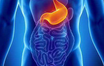 Tubo digestivo alimentación intestino delgado