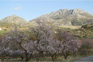 turismo-rural-paisaje-almendros-el-burgo-sierra-de-las-nieves-malaga