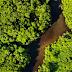 Motivos para proteger a floresta Amazônica nunca serão demais