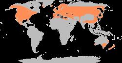 تعرف على انواع وسلالات البط المختلفه بالصور والفديو