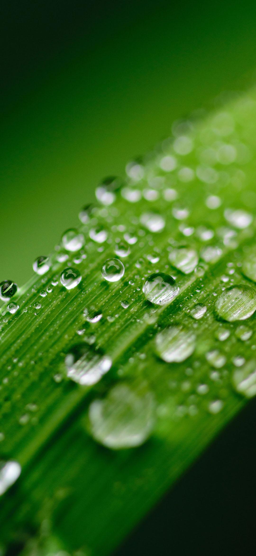 خلفية نقاط المياه النقية على ورقة خضراء