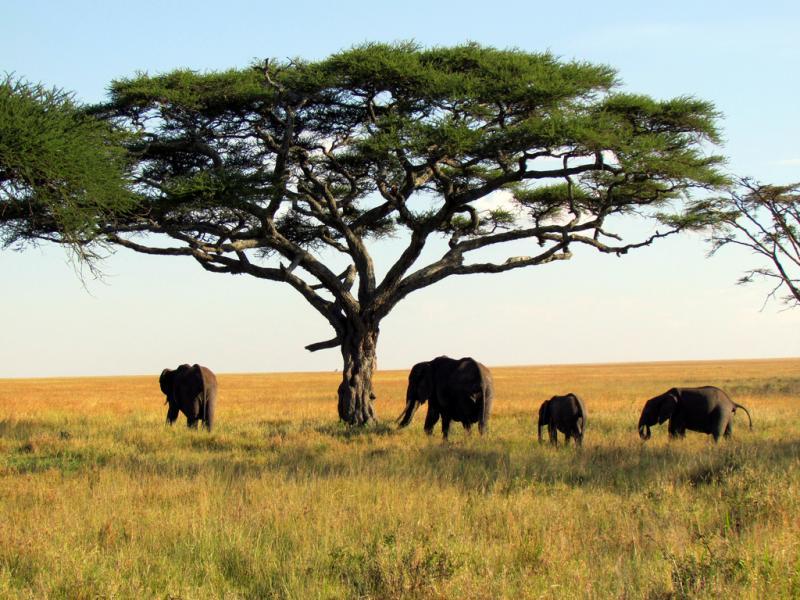 Serengeti National Park 5