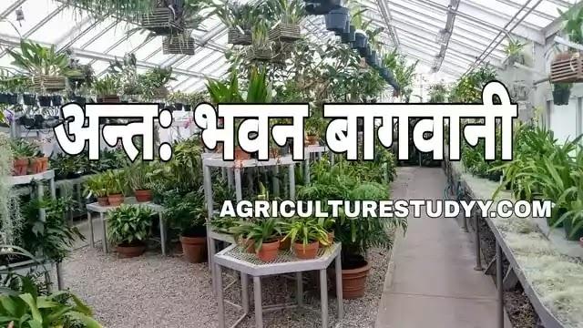 अन्त: भवन बागवानी क्या है इसके लिए उपयुक्त पौधों के नाम एवं उगाने की विधि, indoor gardening in hindi, indoor plants meaning in hindi, अलंकृत बागवानी,