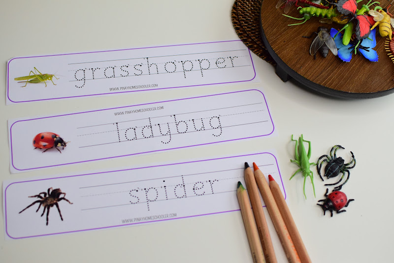 INSECT THEMED SPELLING WORKSHEETS