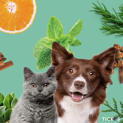 Óleos essenciais em animais de estimação