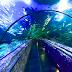 Mengunjungi Seaworld? Yuk Simak Daftar Harga Tiket Masuknya Disini
