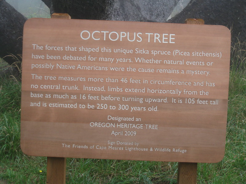 tree octopus pictures