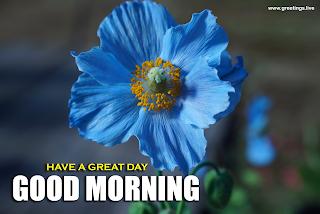 hokkaido flower Good morning