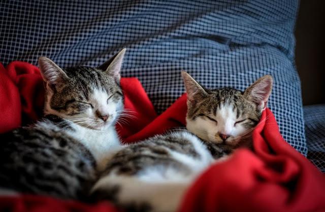 Tips Perawatan Kucing Jangka Panjang