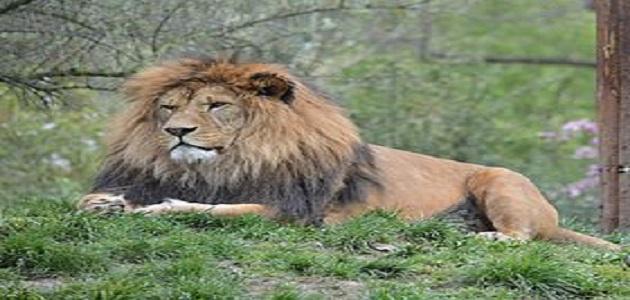 أغرب الحيوانات المنقرضة وسبب انقراضها