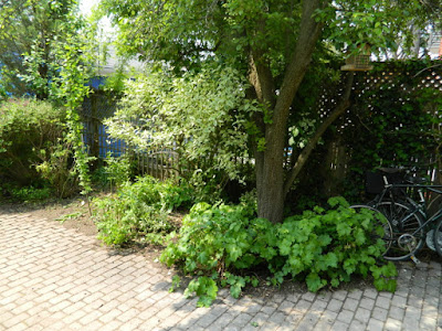 Toronto Wychwood Backyard Spring Cleanup After by Paul Jung Gardening Services--a Toronto Gardening Services Company