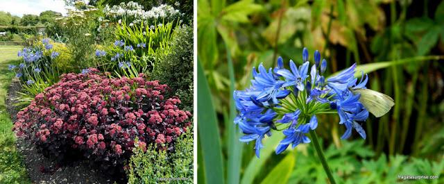 Flores do jardim do Hosítal of Saint Cross