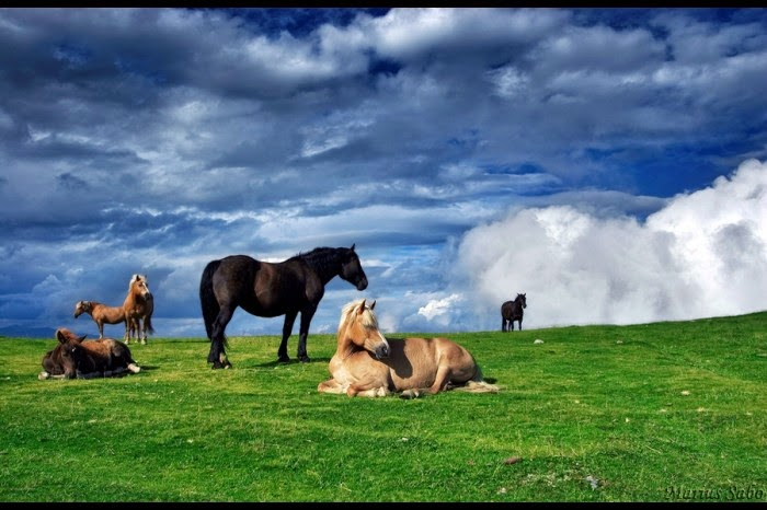 Fotografia caballos en pastizal