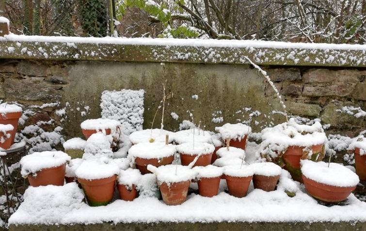 Terrakotta Töpfe im Winter