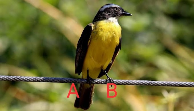 Why Birds does not get shock by Electricity in Hindi | Engineer Dost