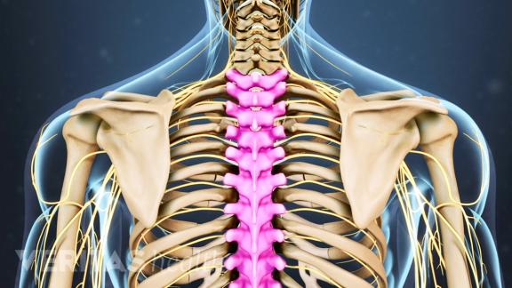 Shoulder, Thorax & Thoracic Spine