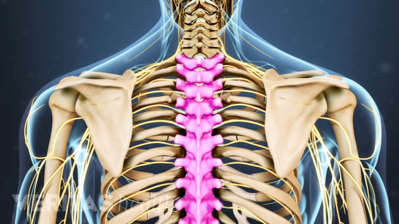 Shoulder, Thorax & Thoracic Spine