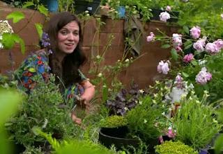 Frances plants tubs of Lavender