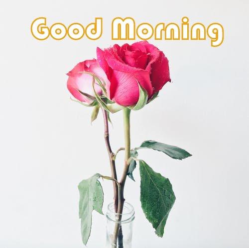 Red Rose Good Morning Image