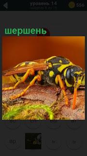 ползет шершень желтого цвета с черной спинкой