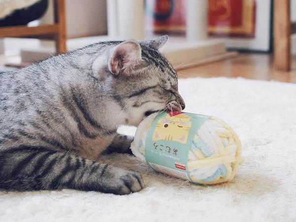 目をつぶって毛糸玉にかぶりつくサバトラ猫