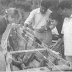 The Survival of the Log Canoe