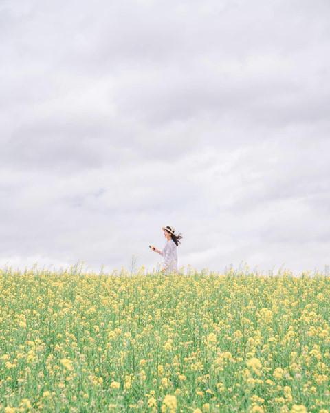 Dù hoa cải nở rộ nhiều nhất vào tháng 5, các vùng khác nhau ở Hàn Quốc sẽ có mùa hoa cải chênh lệch nhau 1-2 tháng. Hoa cải thường nở ở đảo Jeju vào cuối tháng 3, ở Busan là tháng 4, Seoul, Gyeongju, Suncheon sẽ có mùa hoa rơi vào tháng 5.